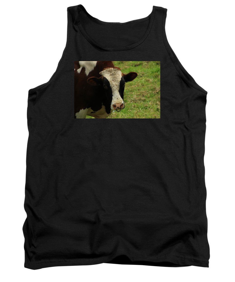 Bull Tank Top featuring the photograph Head Of A Bull On A Farm by Robert Hamm