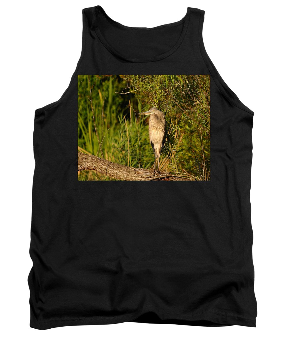 Great Blue Heron Tank Top featuring the photograph Heron At Sundown by Al Powell Photography USA