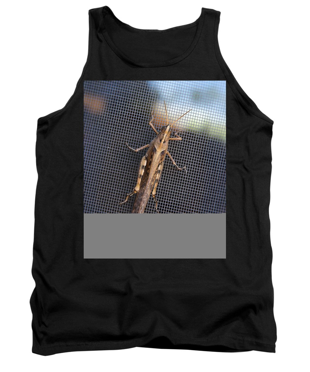 Grasshopper Tank Top featuring the photograph Hopper by Kelley King