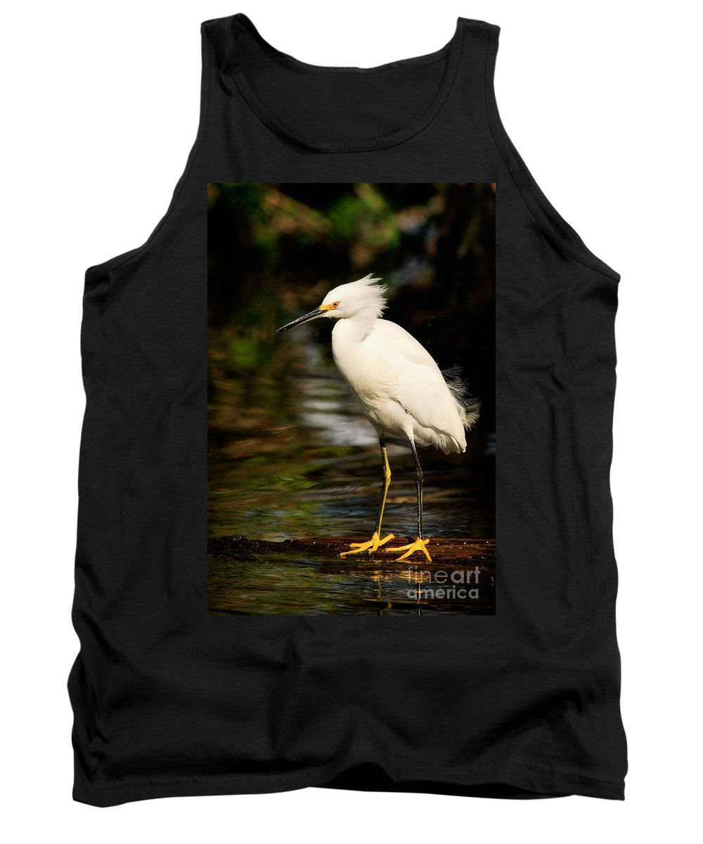 Immature Snowy Egret Tank Top featuring the photograph Immature Snowy Egret by Matt Suess