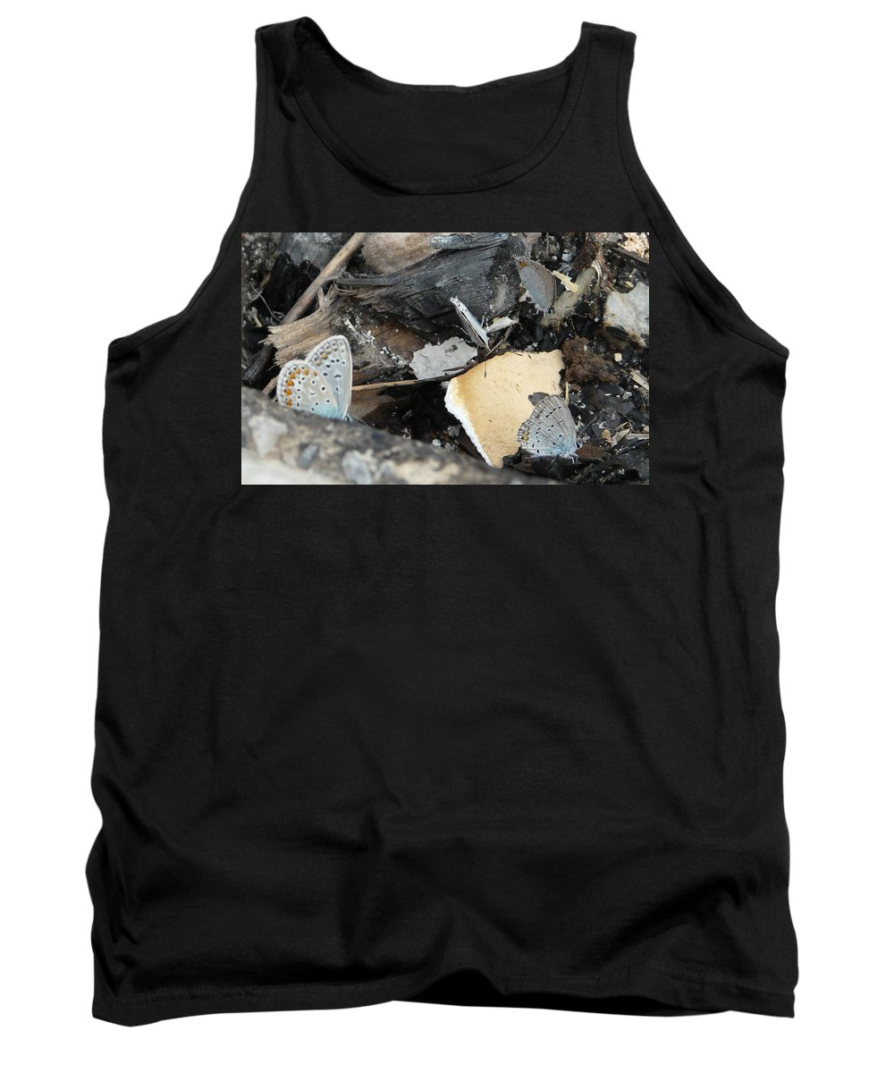 Maculinea Arion Tank Top featuring the photograph Large Blue Butterfly by Valerie Ornstein