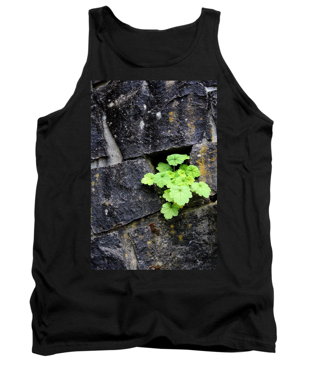 Green Tank Top featuring the photograph Life Will Find A Way by Maureen Jordan