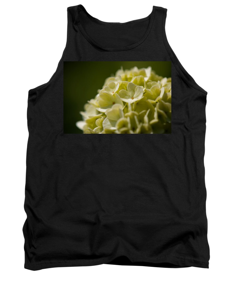 Hydrangea Tank Top featuring the photograph Lime Hydrangea by Lisa Knechtel
