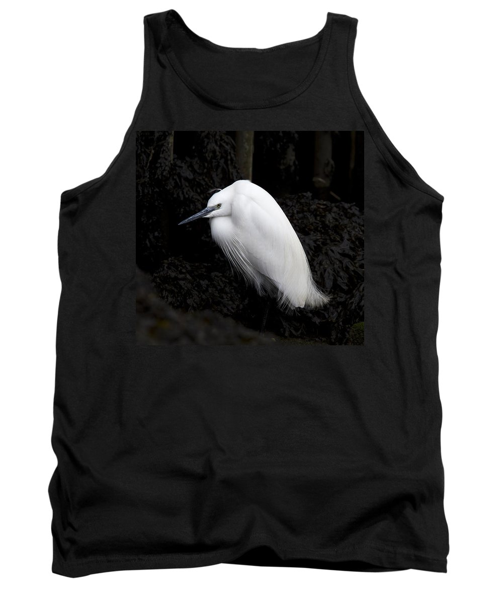 Little Egret Tank Top featuring the photograph Little Egret by Tony Mills