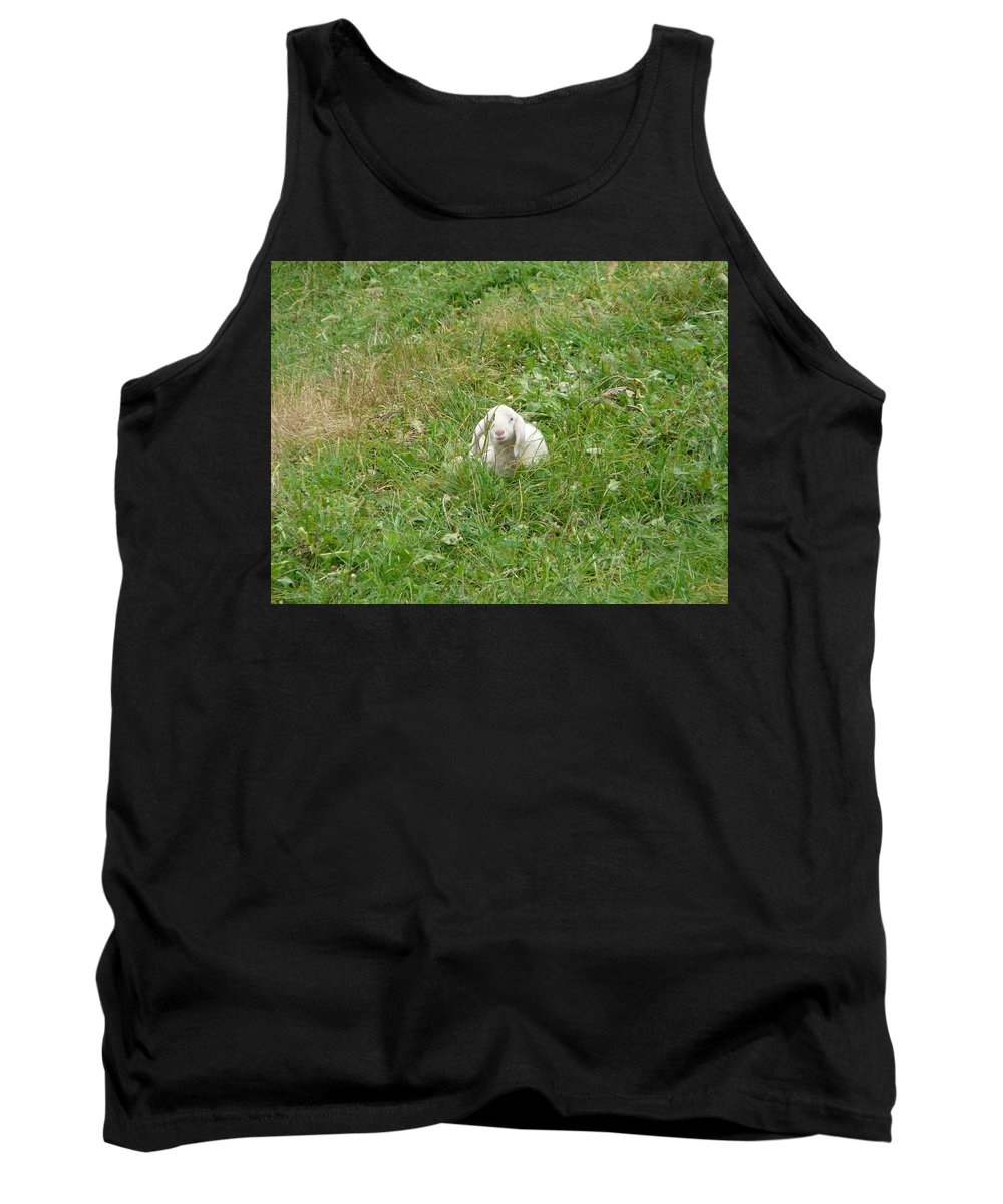 Lamb Tank Top featuring the photograph Little Lamb by Valerie Ornstein