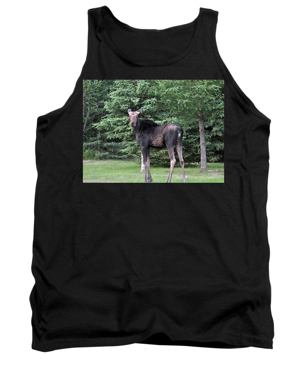 Moose Tank Top featuring the photograph Long Legged Moose by Glenn Gordon