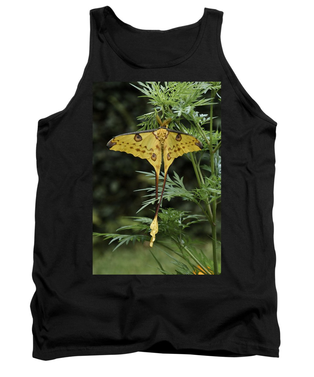 Madagascar Tank Top featuring the photograph Madagascar Comet Moth by Michele Burgess