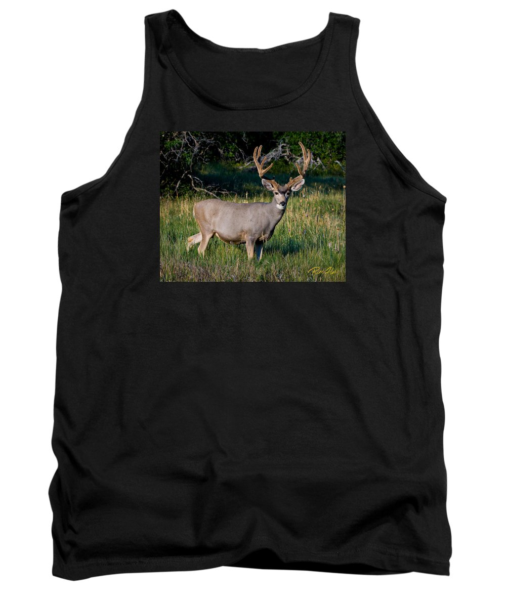Animals Tank Top featuring the photograph Mountain Buck by Rikk Flohr