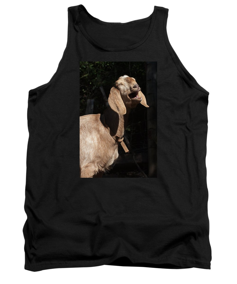 Goat Tank Top featuring the photograph Operatic Goat by Grant Groberg