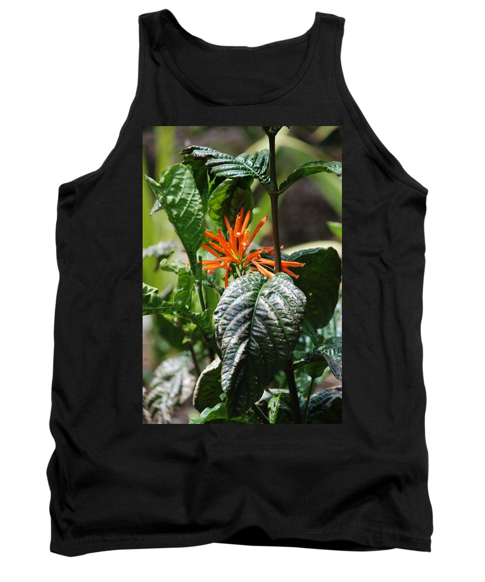 Banana Leaf Tank Top featuring the photograph Orange Plants by Rob Hans