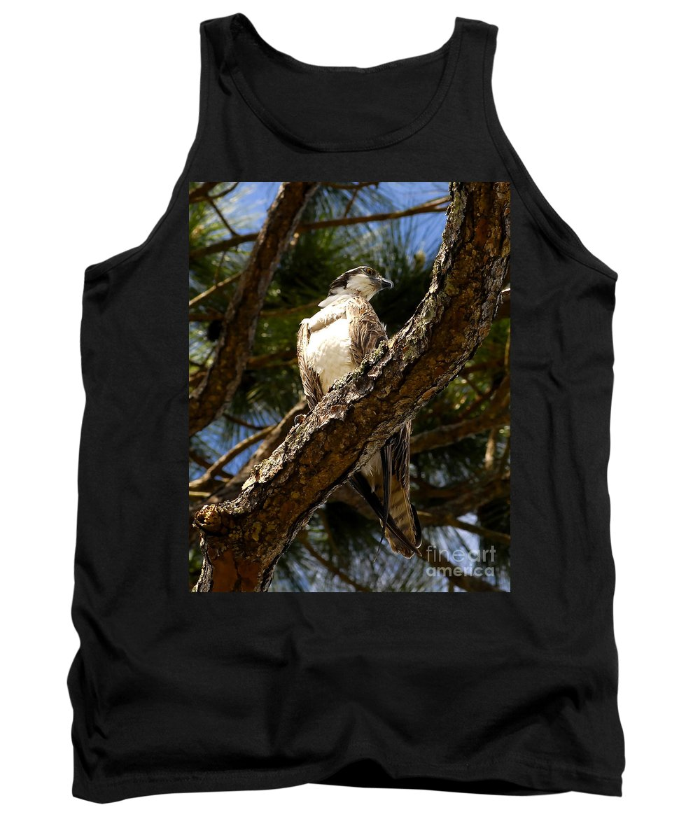 Osprey Tank Top featuring the photograph Osprey Hunting by David Lee Thompson
