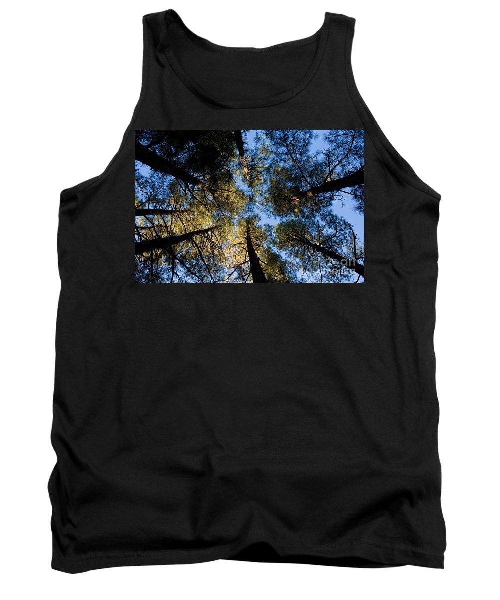 Pine Trees Tank Top featuring the photograph Pine Trees Near Ruidoso Nm by Matt Suess