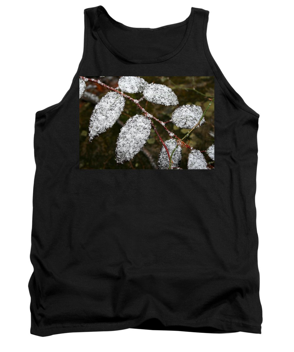 Winter Season Cold Snow Tree Branch Leaf Leaves White Green Frosted Powder Tank Top featuring the photograph Powdered by Andrei Shliakhau