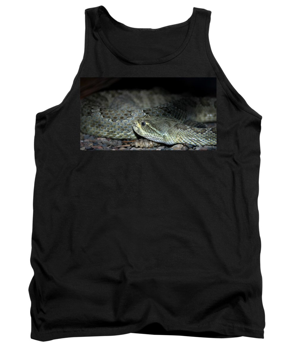 Snake Tank Top featuring the photograph Prarie Rattle Snake by Anthony Jones
