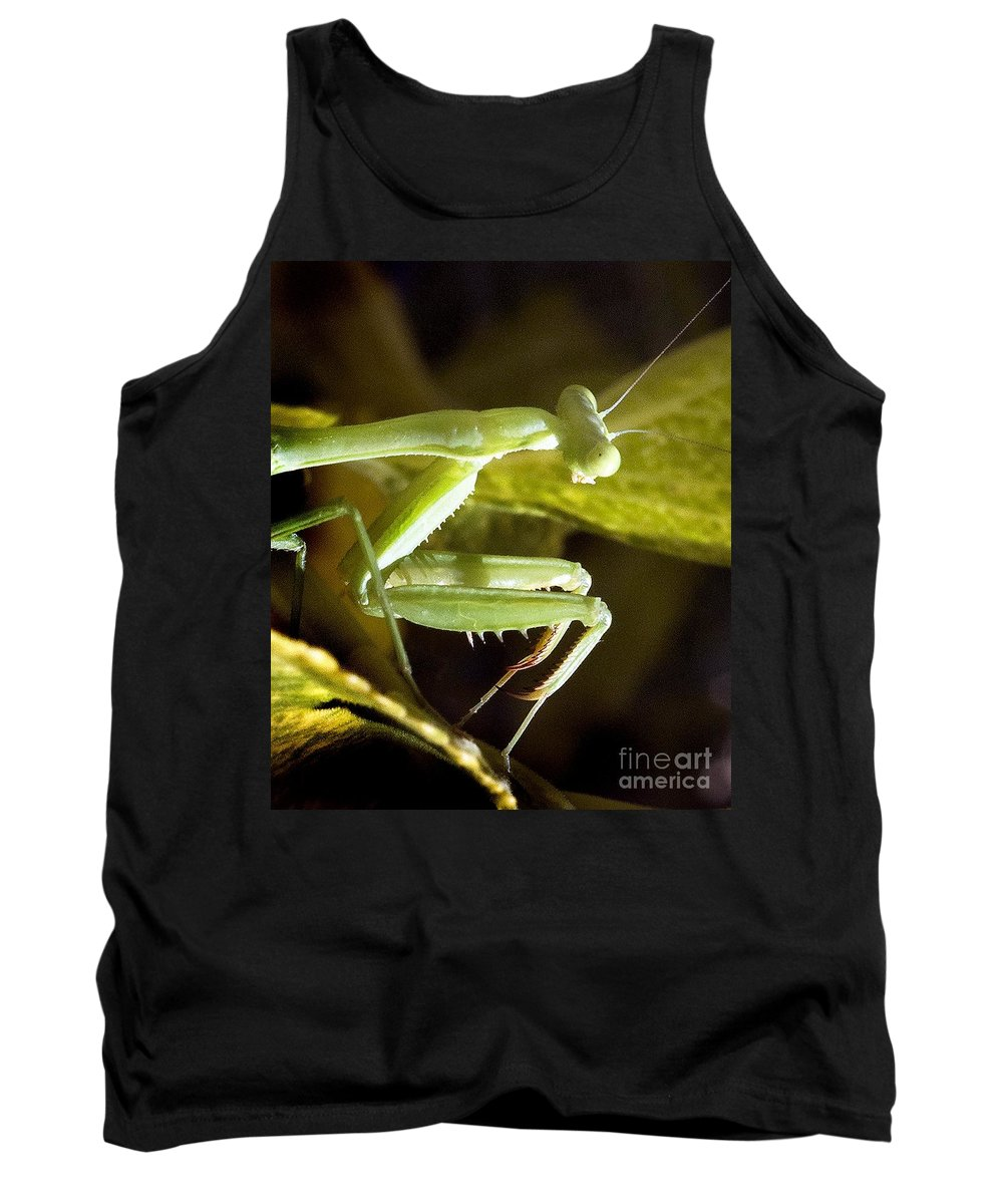 California Scenes Tank Top featuring the photograph Praying For Prey by Norman Andrus