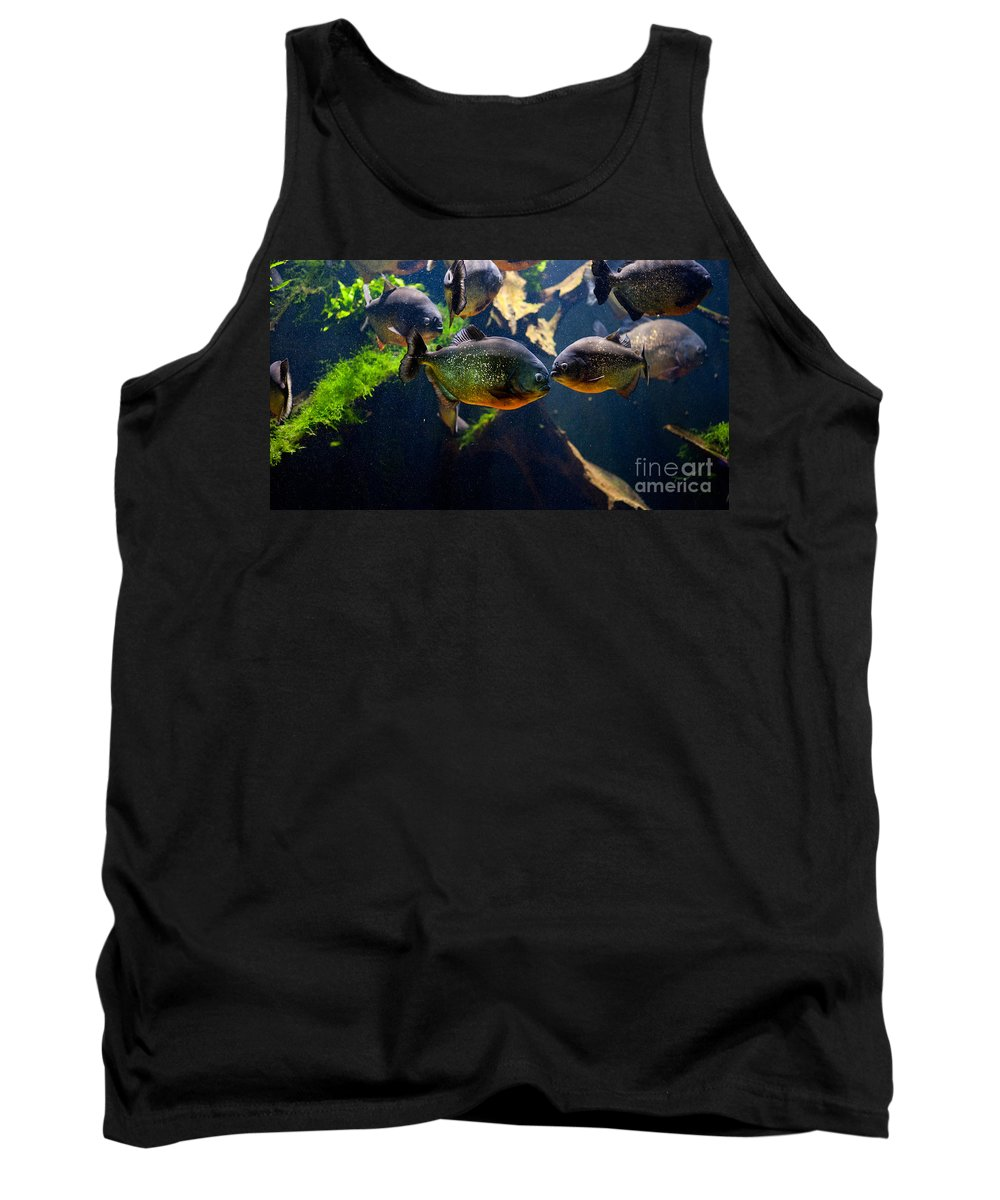 Piranha Tank Top featuring the photograph Red Bellied Piranha Or Red Piranha by Arletta Cwalina
