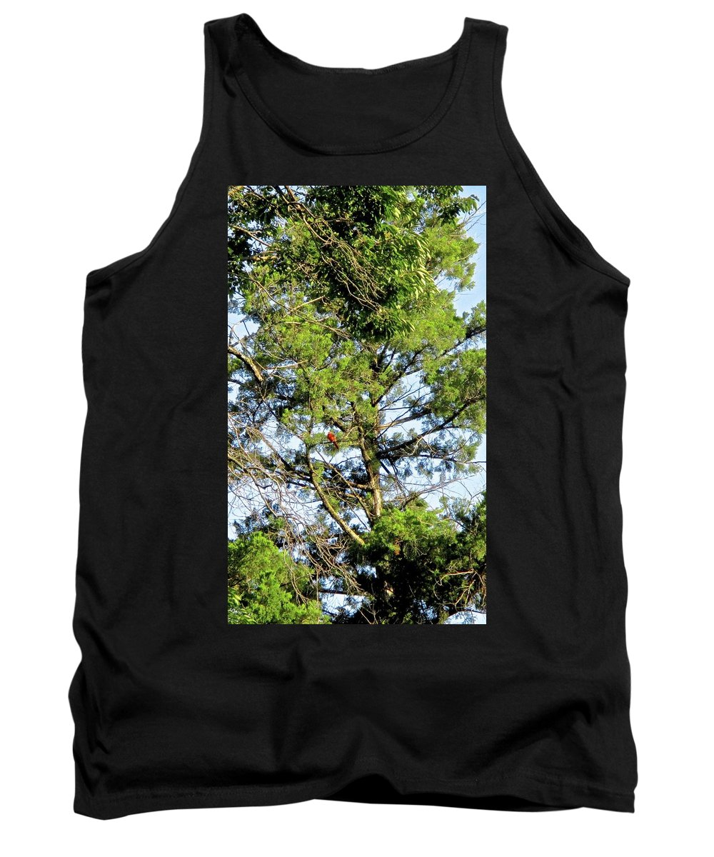 Cardinal Tank Top featuring the photograph Red Cardinal In Tree by Janet K Wilcox