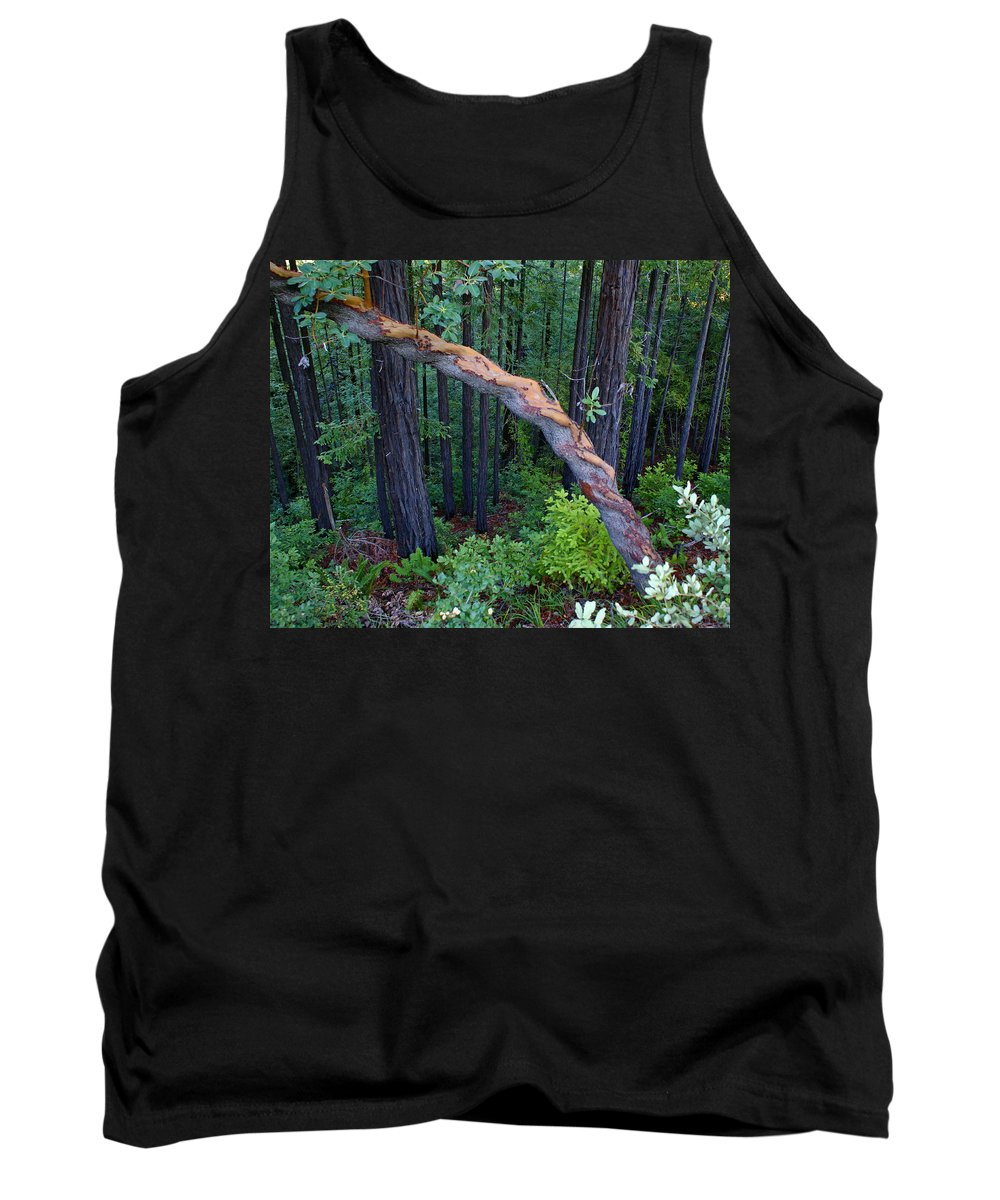 Mount Tamalpais Tank Top featuring the photograph Redwood Forest by Ben Upham III