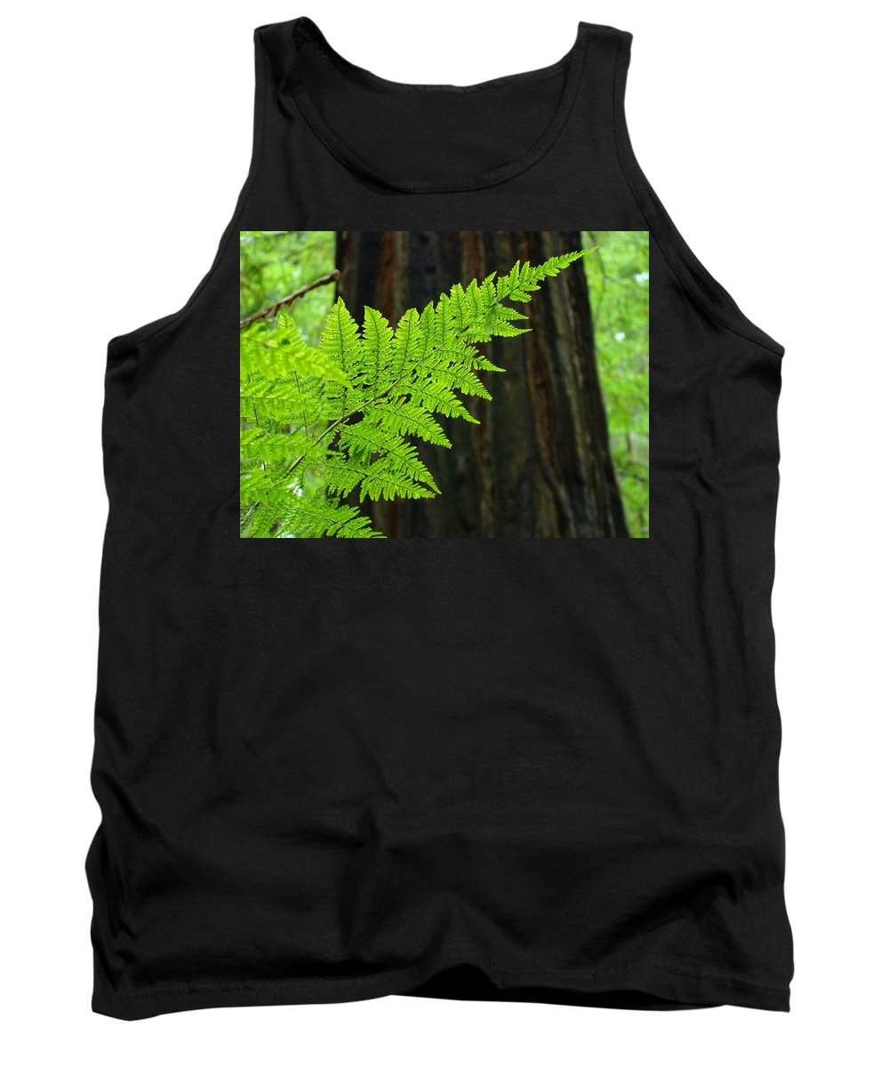 Fern Tank Top featuring the photograph Redwood Tree Forest Ferns Art Prints Giclee Baslee Troutman by Baslee Troutman