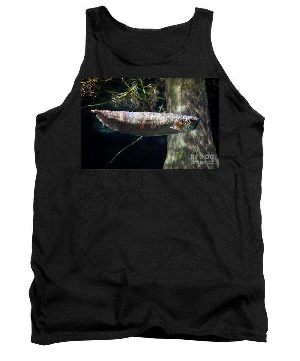 Silver Arowana Tank Top featuring the photograph Silver Arowana Fish In Zoo by Arletta Cwalina