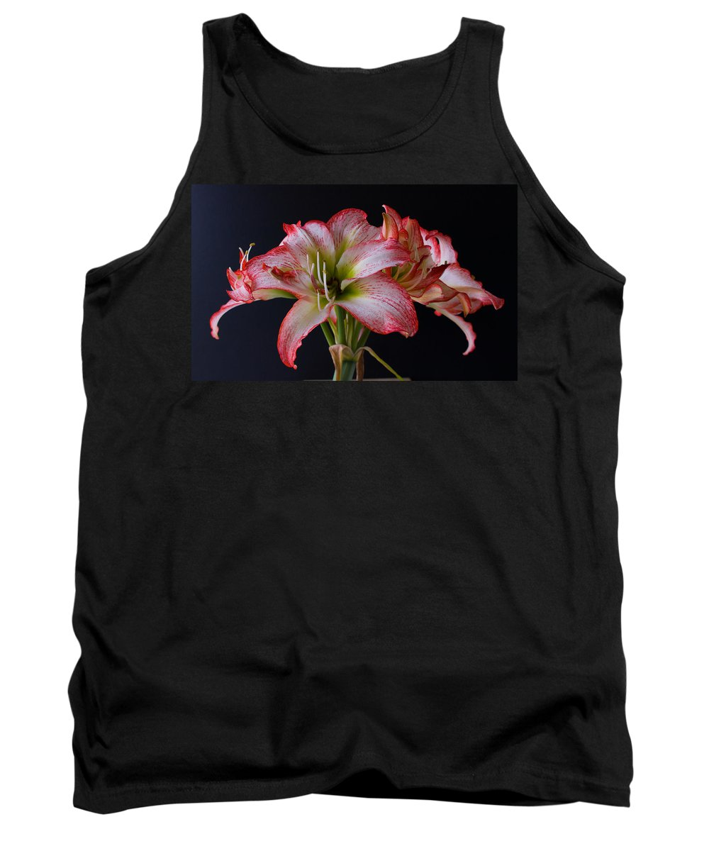 Amaryllis; Flower; Bloom; Blossom; Springtime; Spring; March; Stem. Bulb; Plant; Wildflower; Black; Tank Top featuring the photograph Spring Amaryllis by Allan Hughes