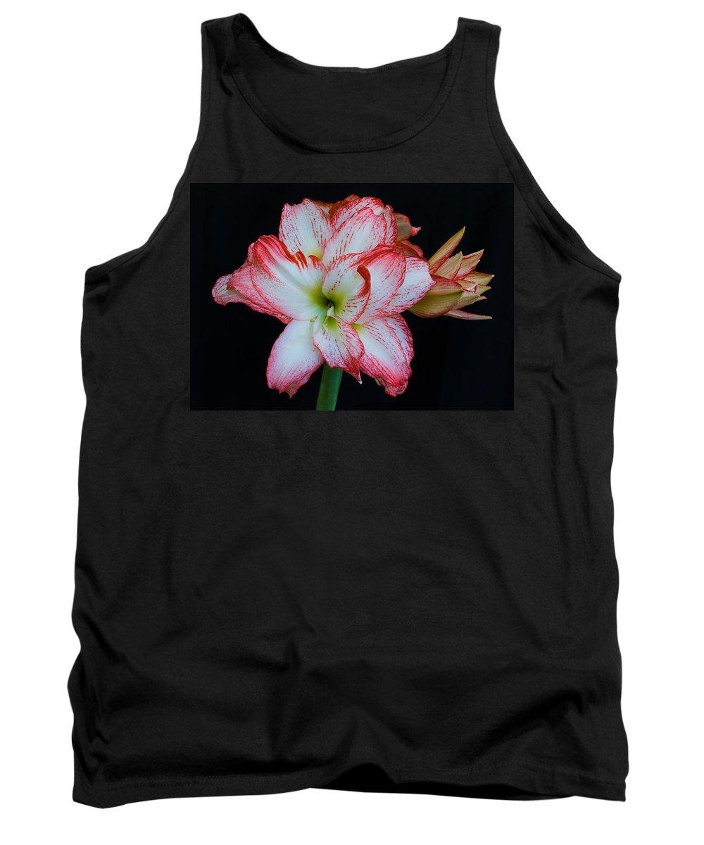 Amaryllis; Flower; Bloom; Blossom; Springtime; Spring; March; Stem. Bulb; Plant; Wildflower; Black; Tank Top featuring the photograph Springtime Florida Amaryllis by Allan Hughes