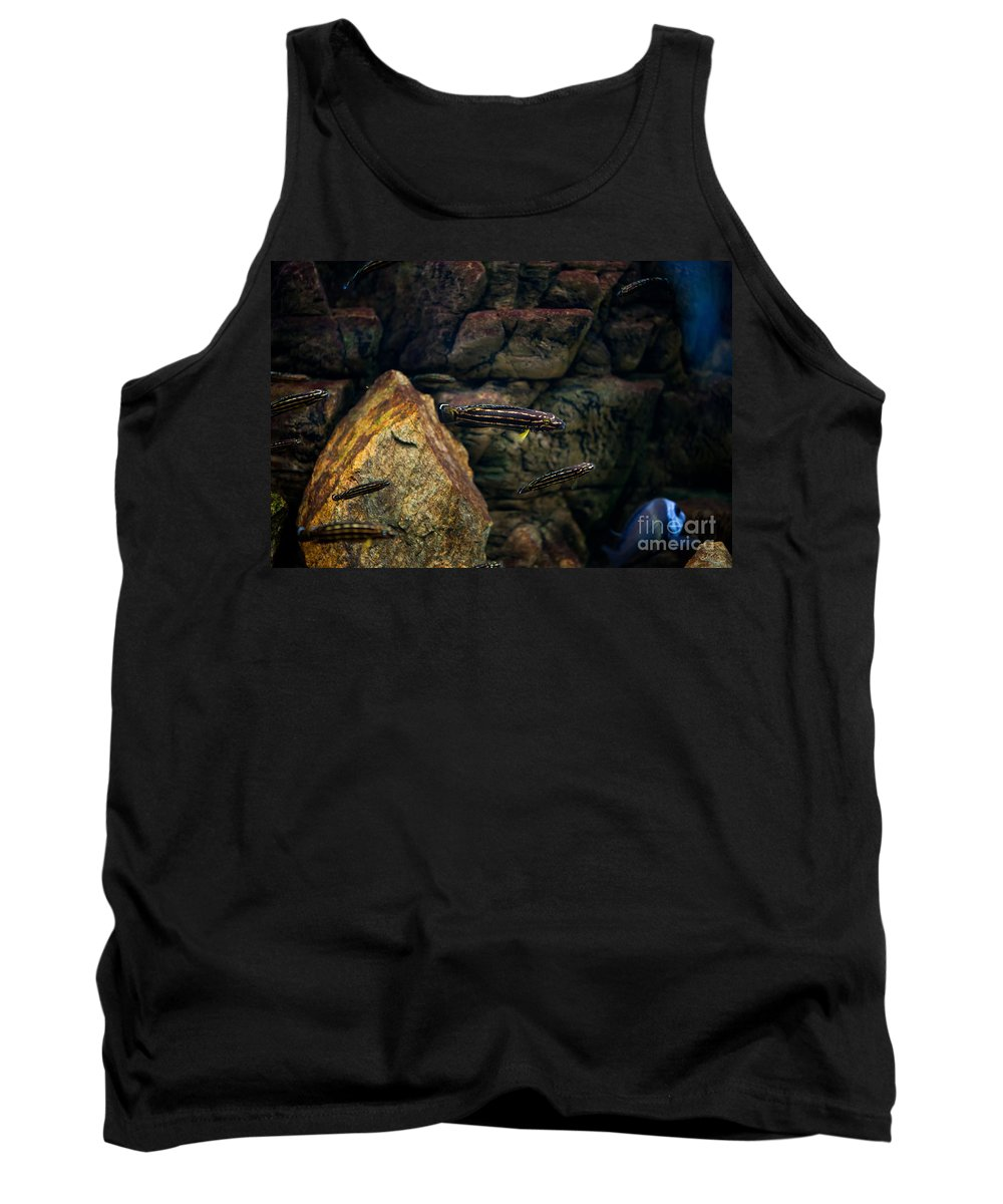Zoo Tank Top featuring the photograph Striped Little Fishes In Aquarium by Arletta Cwalina