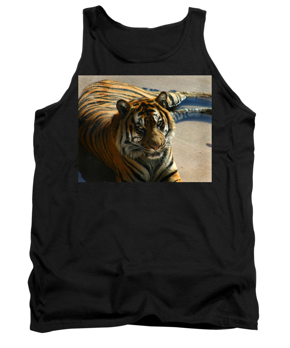 Tiger Tank Top featuring the photograph Sumatran Tiger by Anthony Jones