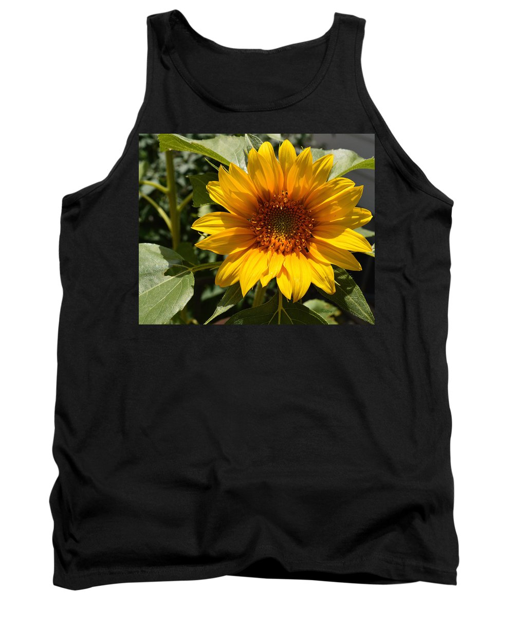 Sunflower Tank Top featuring the painting Sunflower Art- Summer Sun- Sunflowers by Kathy Symonds