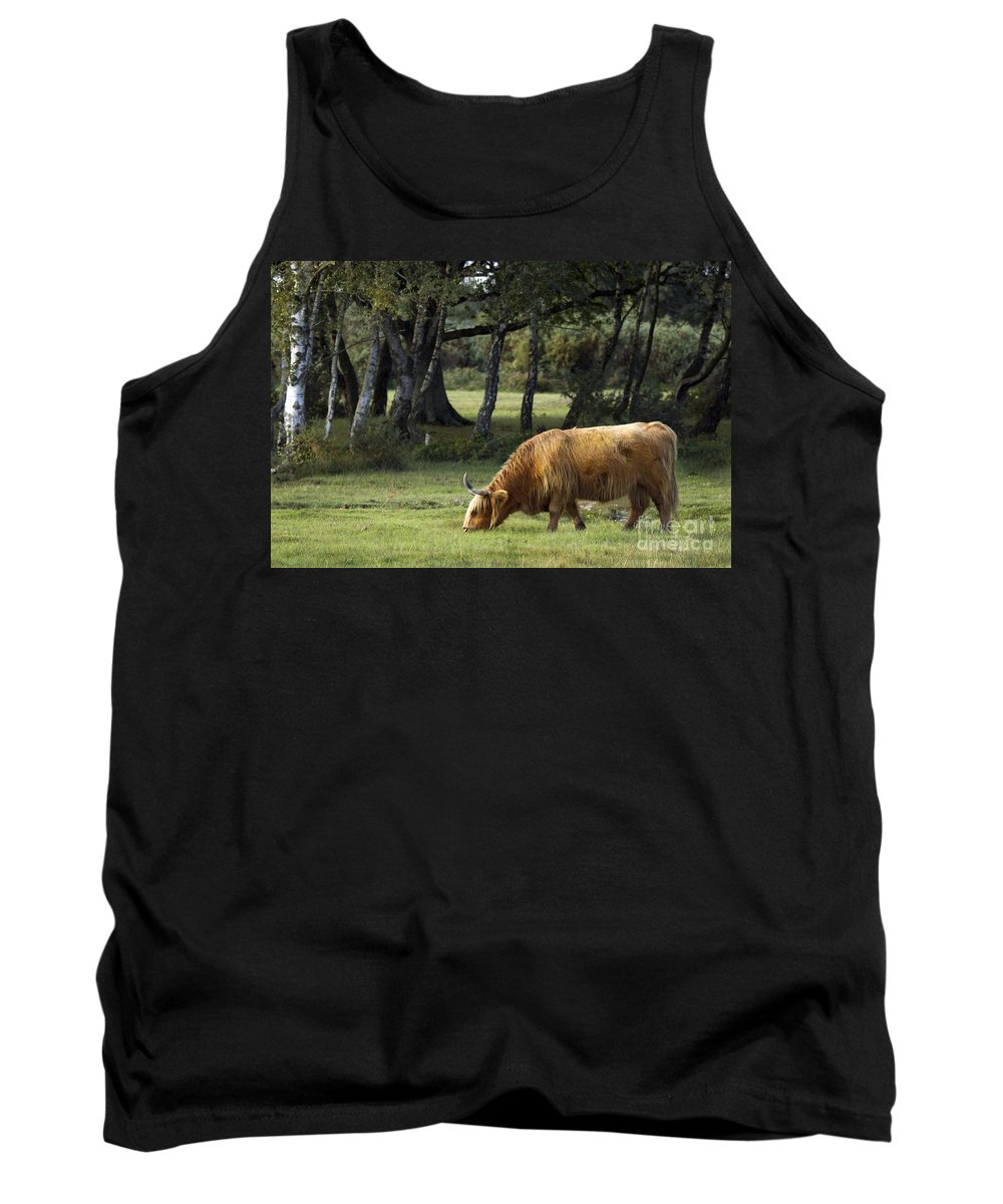 Heilan Coo Tank Top featuring the photograph The Creature Of New Forest by Angel Ciesniarska
