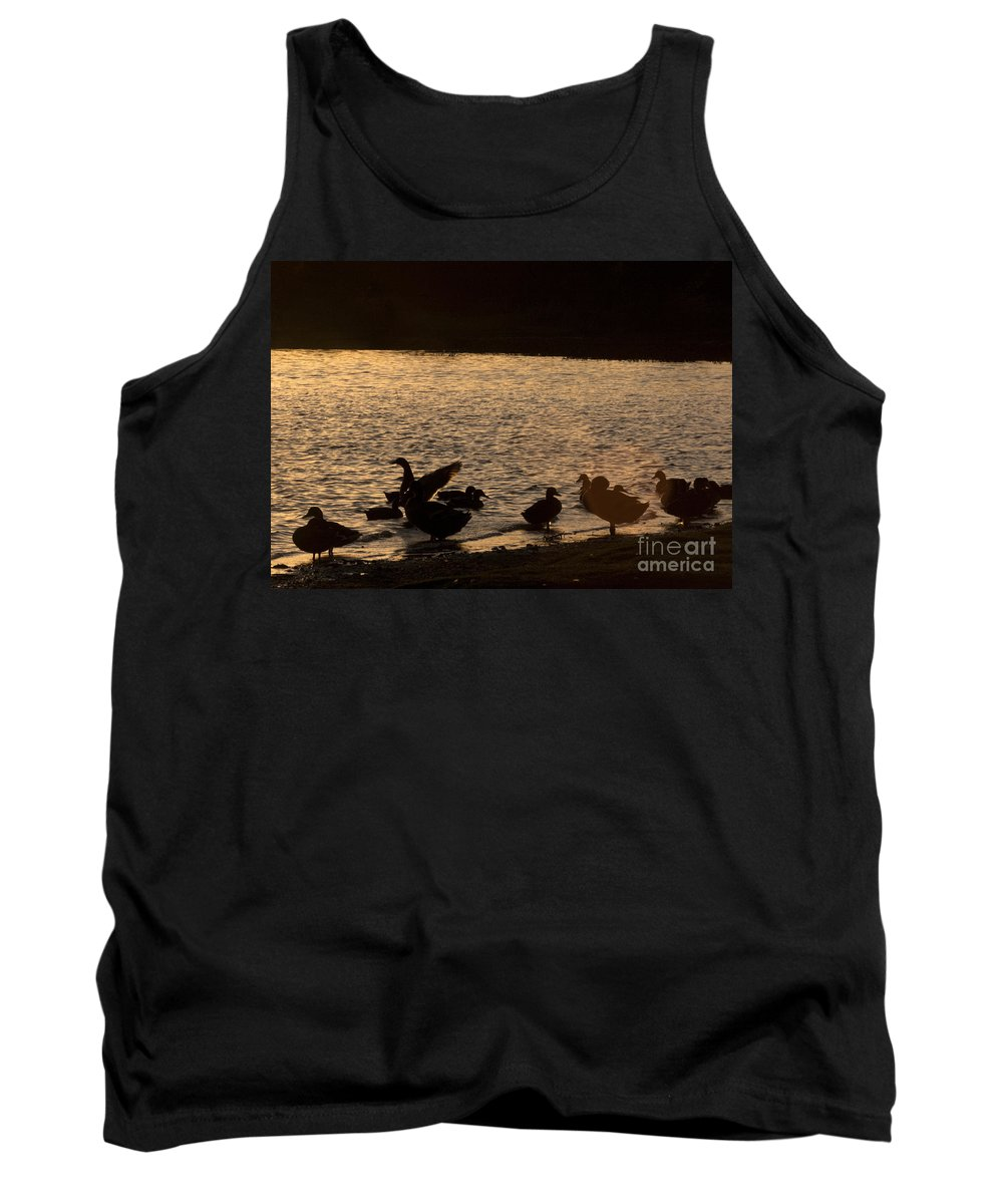 New Forest Tank Top featuring the photograph The Ducks by Angel Ciesniarska