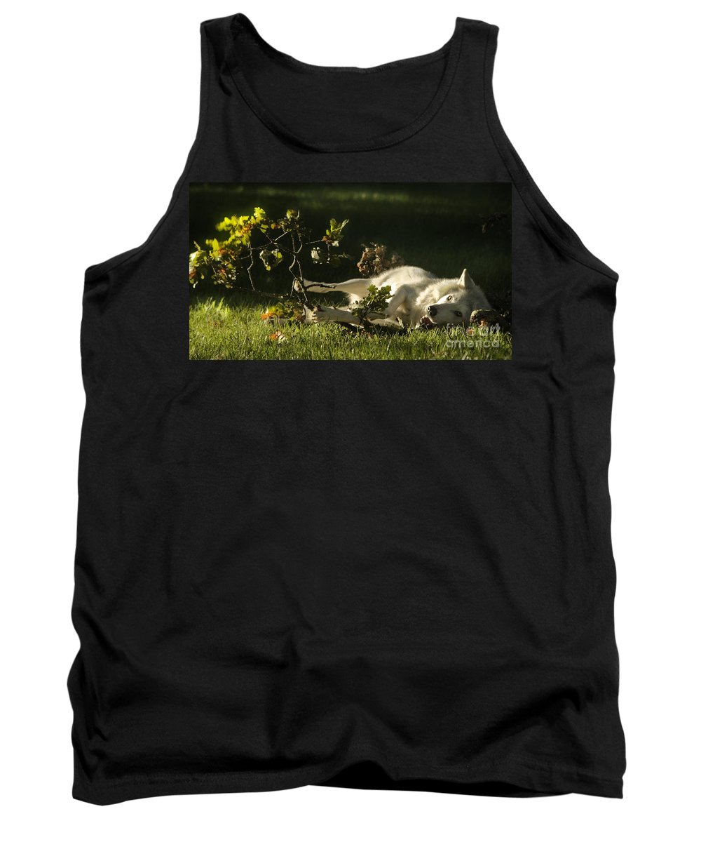 Wolf Tank Top featuring the photograph The Happy Wolf by Angel Ciesniarska
