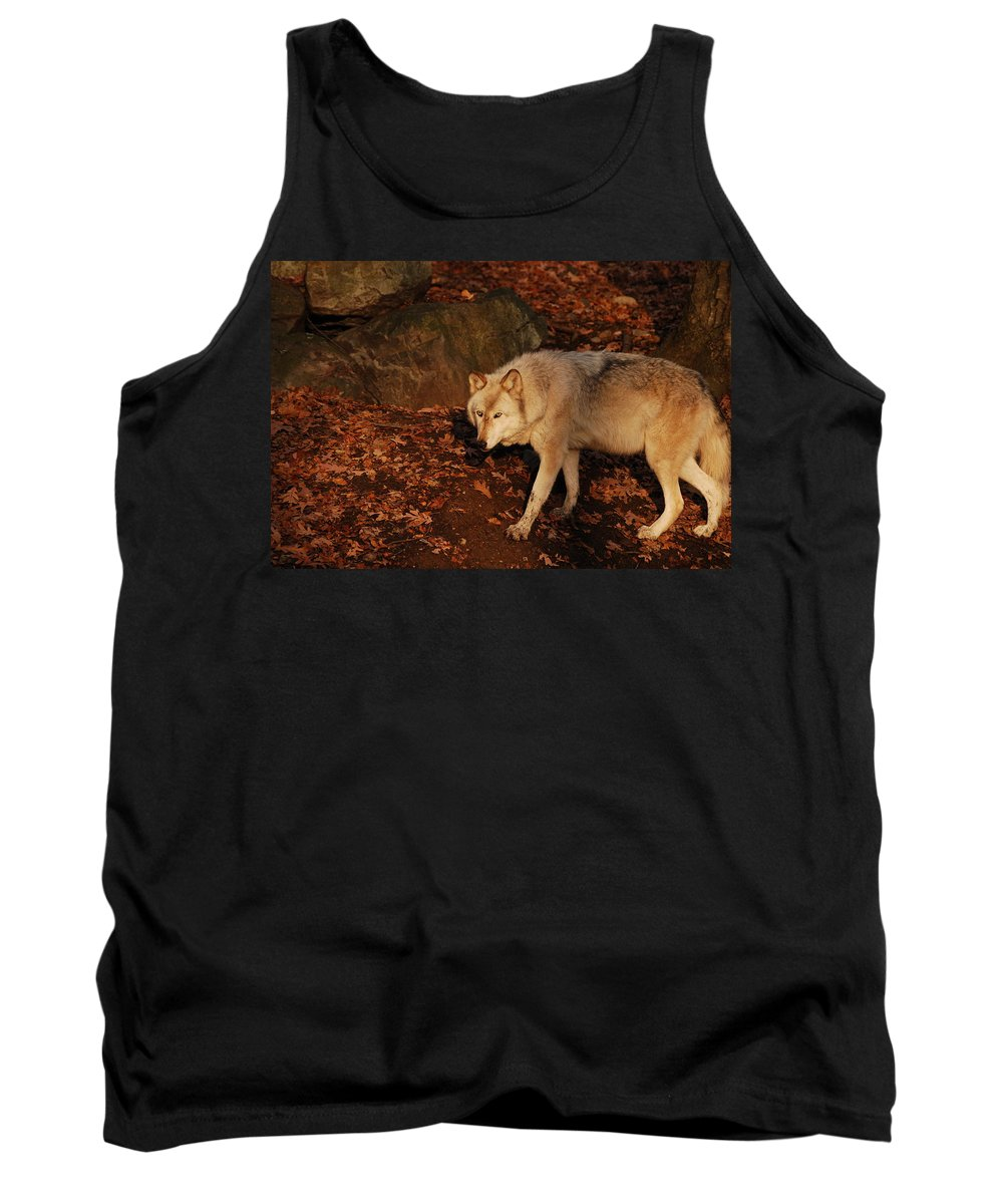 Wolf Tank Top featuring the photograph The Hunter by Lori Tambakis