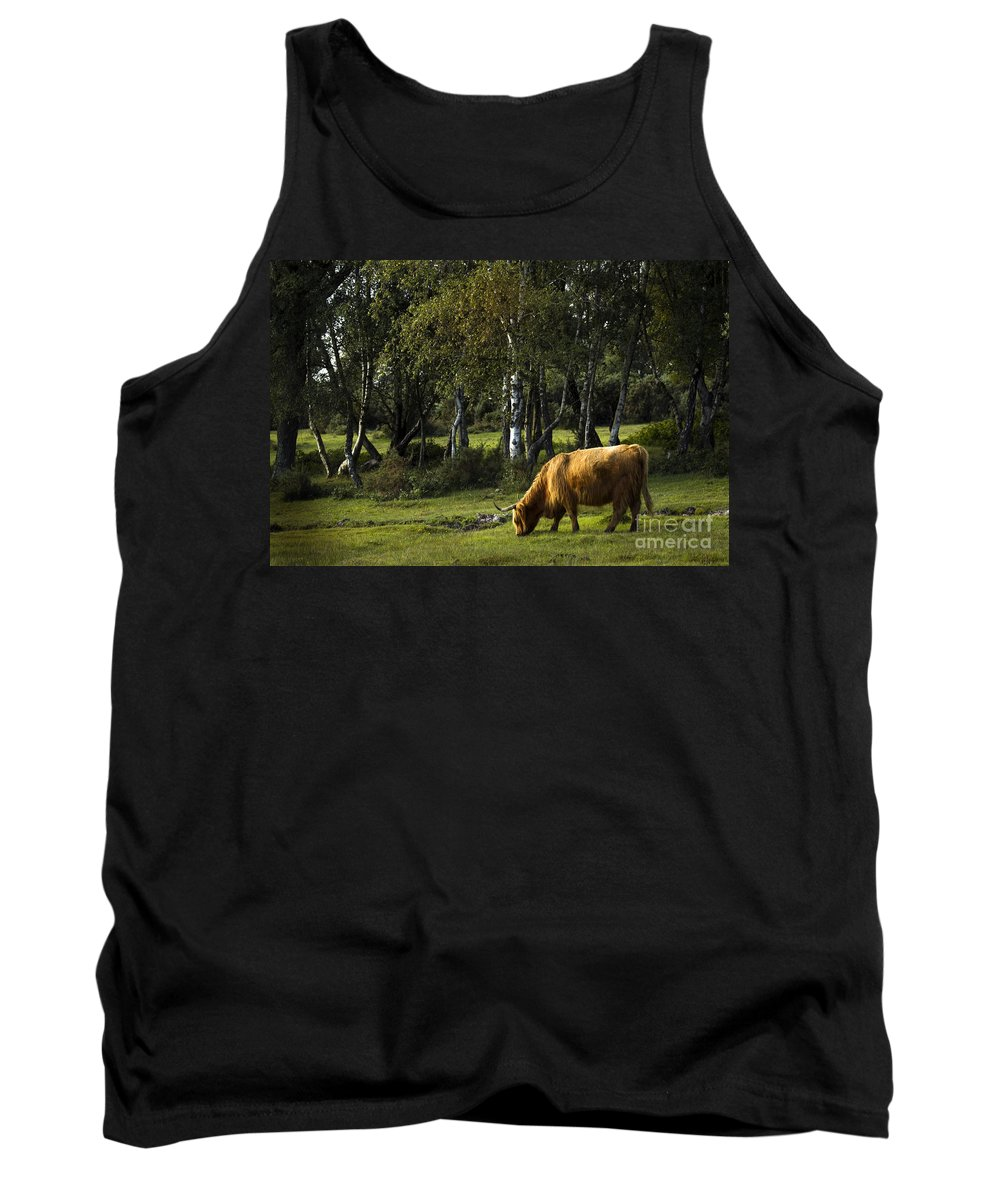 Heilan Coo Tank Top featuring the photograph the New forest creatures by Angel Ciesniarska