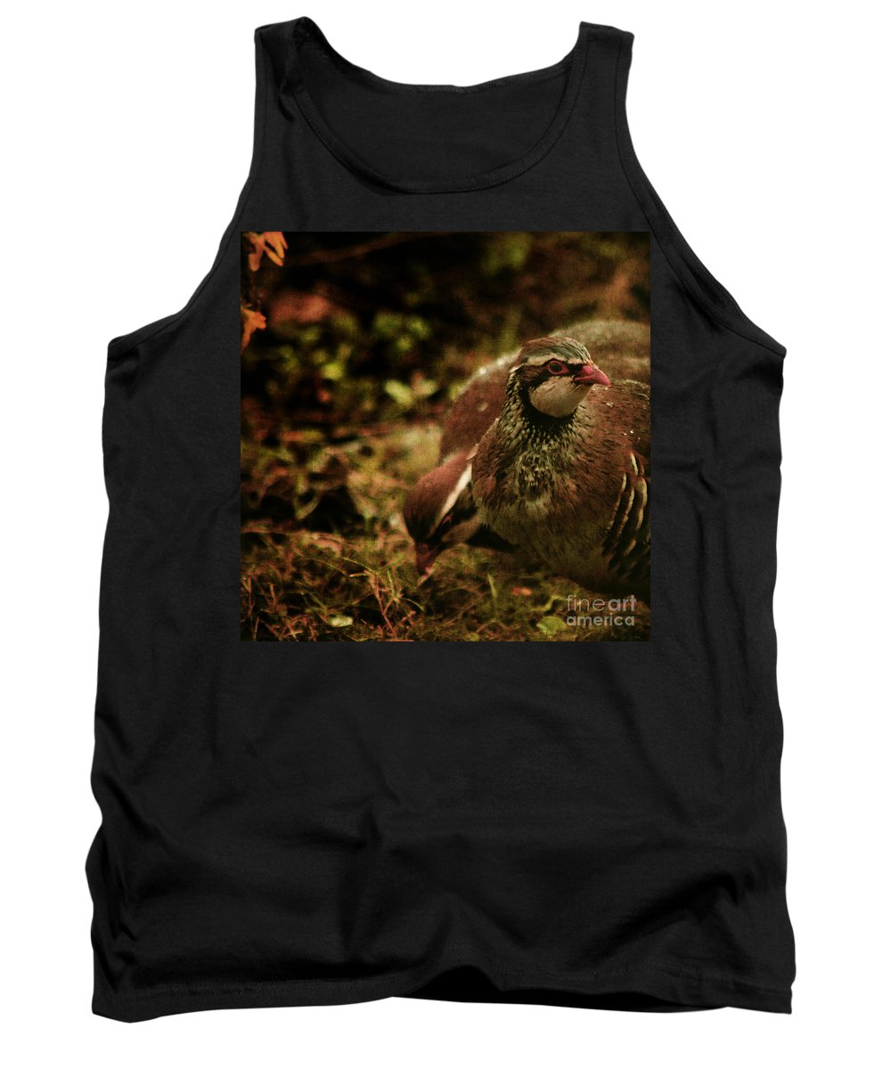 Partridge Tank Top featuring the photograph The Redlegged Partridges by Angel Ciesniarska