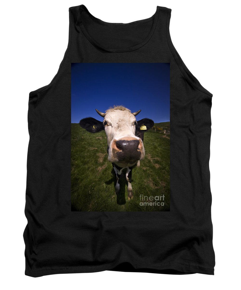 Cow Tank Top featuring the photograph The Wideangled Cow by Angel Ciesniarska