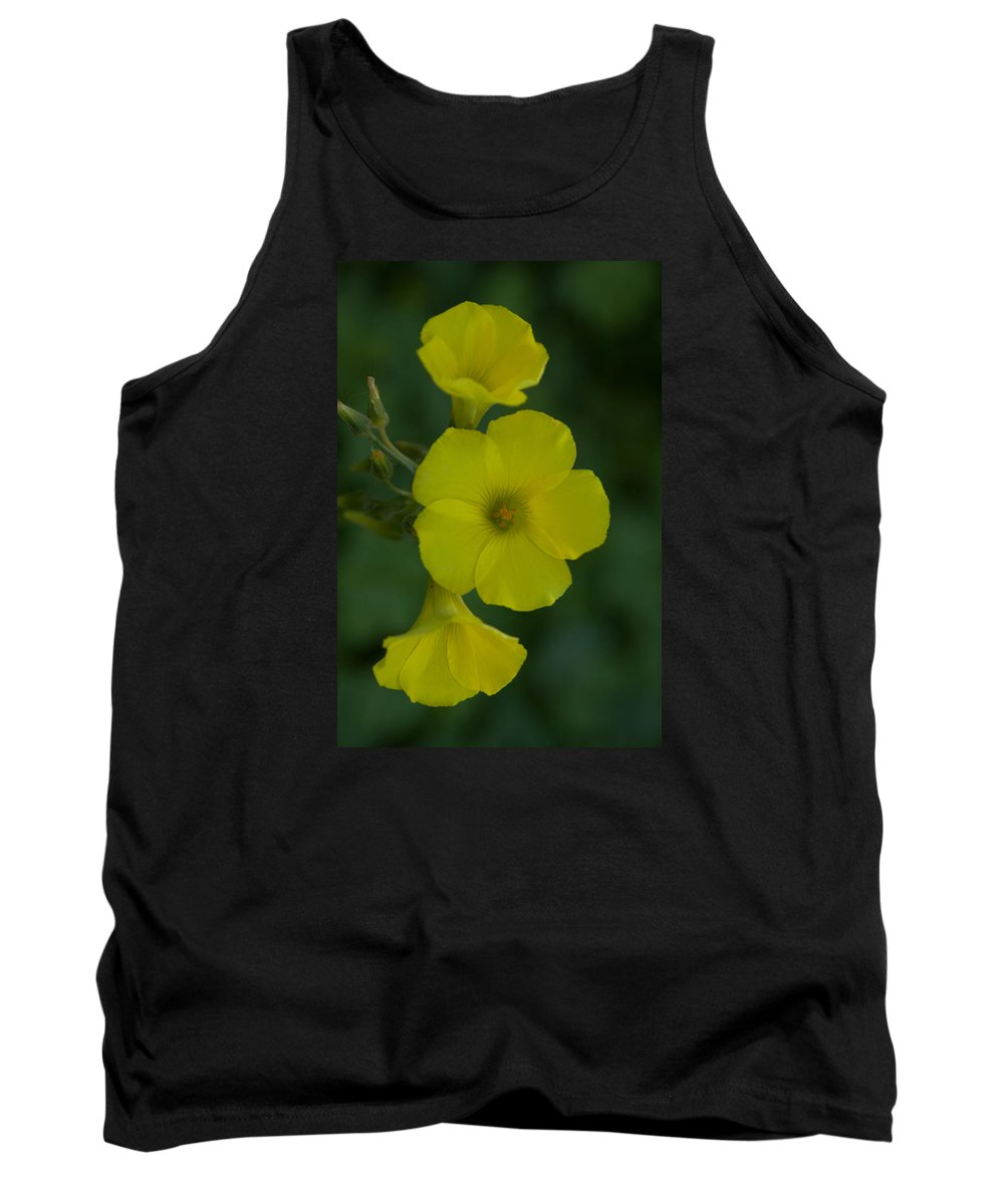 Background Tank Top featuring the photograph Three In One by Jill Mitchell