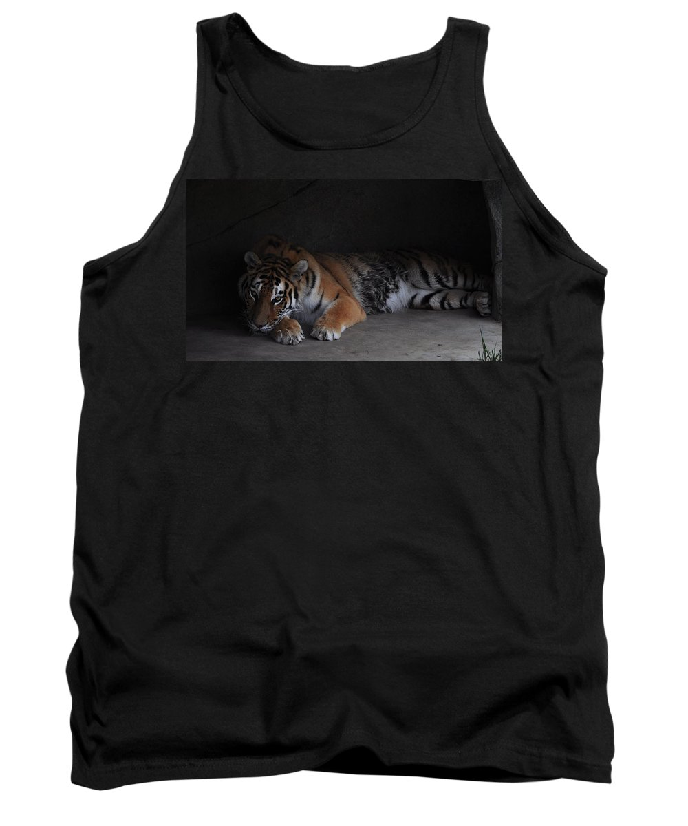 Tiger Tank Top featuring the photograph Tiger by Chrystal Darnell