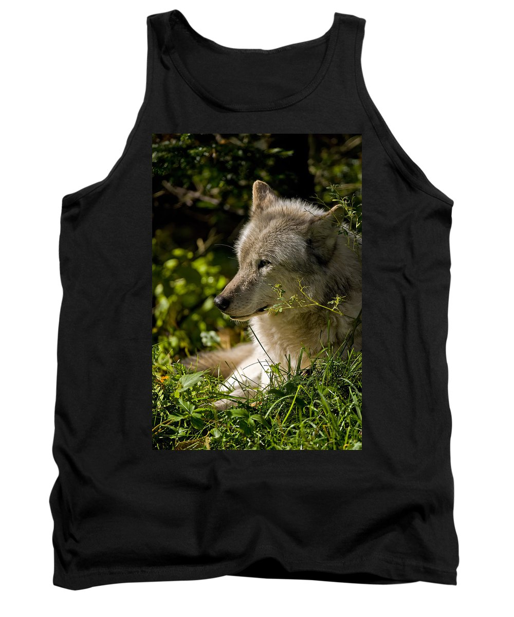 Michael Cummings Tank Top featuring the photograph Timber Wolf Portrait by Michael Cummings
