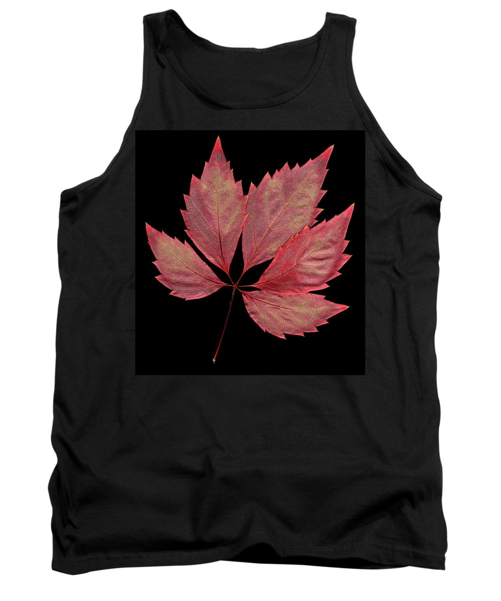 Leaf Tank Top featuring the photograph Vine Leaf by Stefania Levi