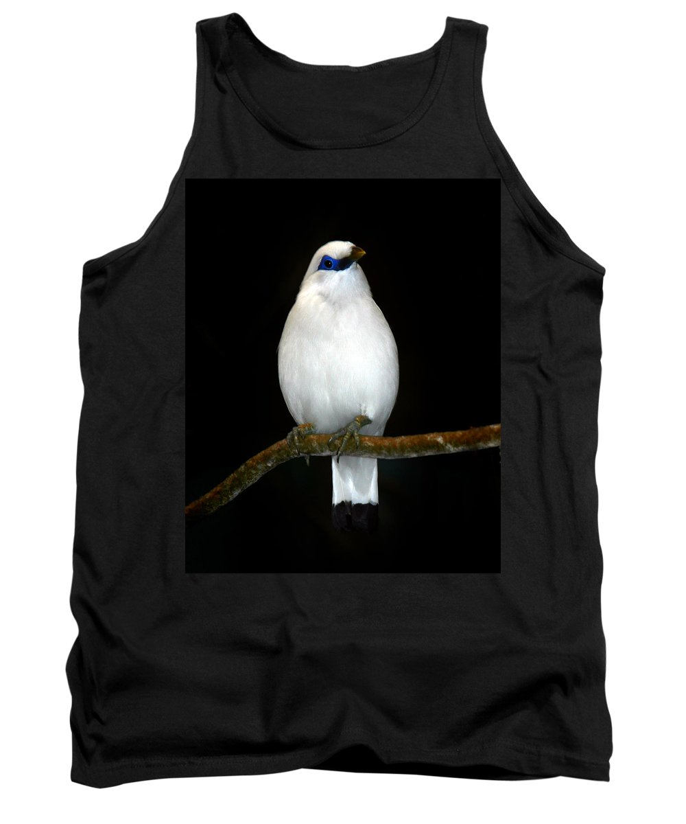 Bird Tank Top featuring the photograph White Bird by Anthony Jones