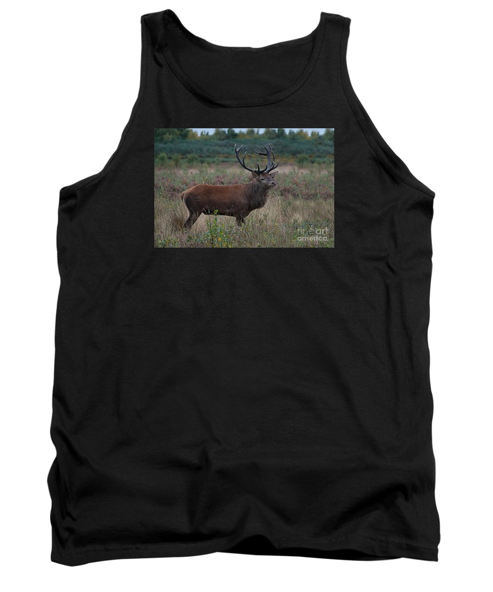 Antlers Tank Top featuring the photograph Wild Stag by Mickey At Rawshutterbug