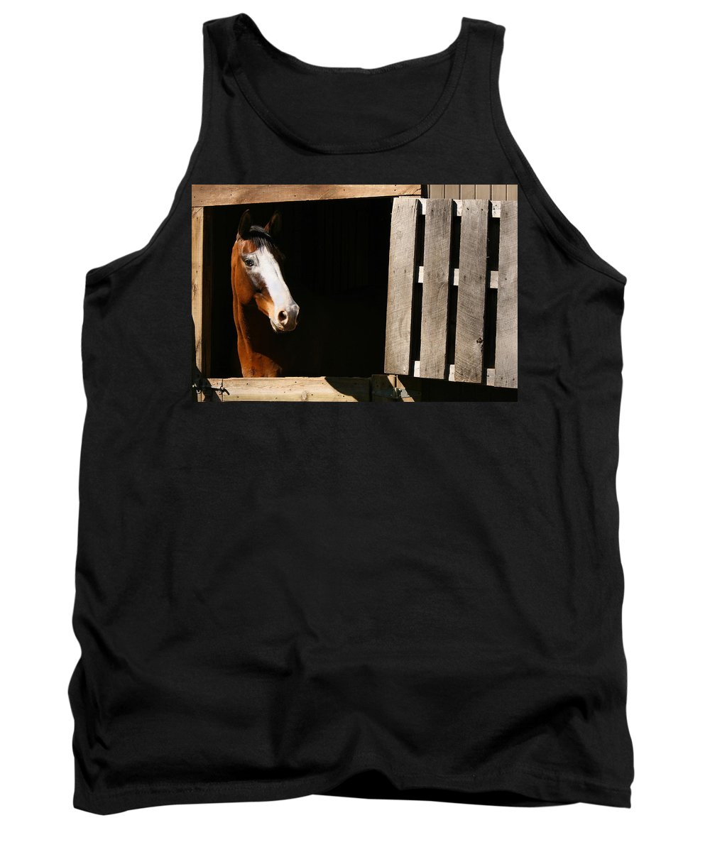 Horse Tank Top featuring the photograph Window by Angela Rath