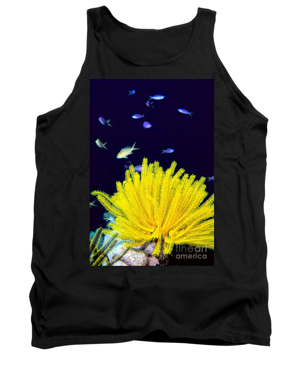C1943 Tank Top featuring the photograph Yellow Feather Star by Ed Robinson - Printscapes