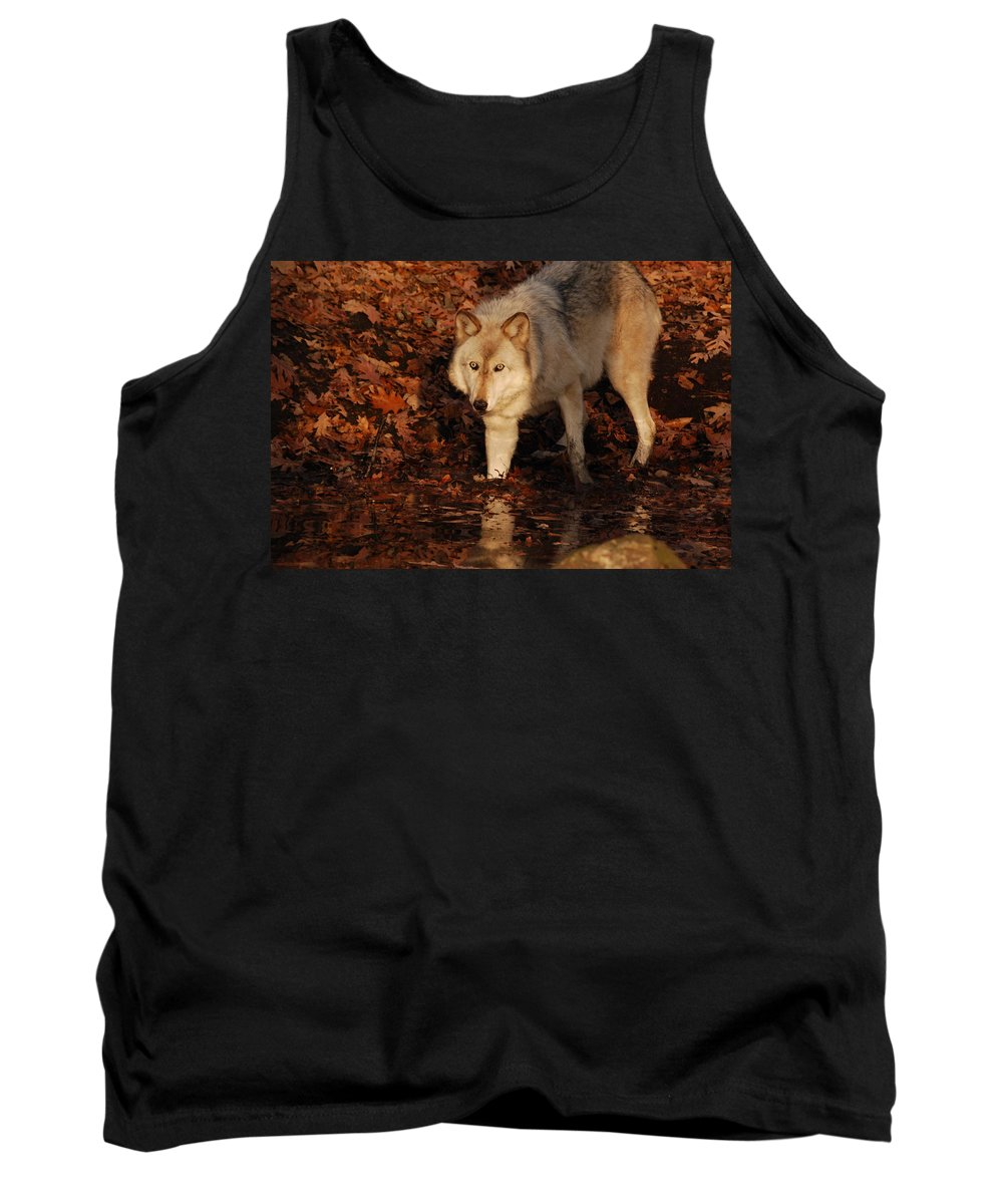 Wolf Tank Top featuring the photograph You Want A Piece Of Me by Lori Tambakis