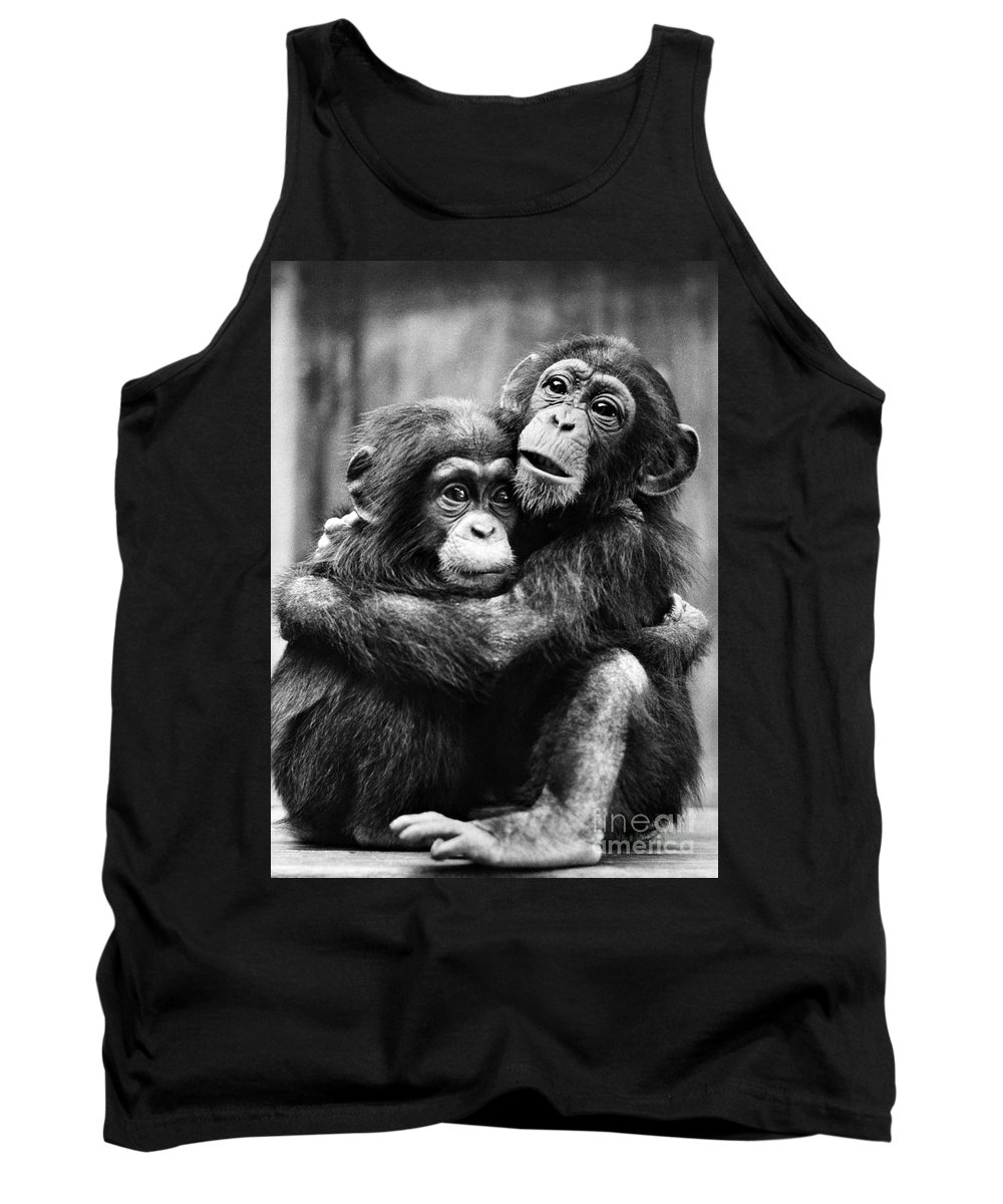 20th Century Tank Top featuring the photograph Young Chimpanzees by Granger