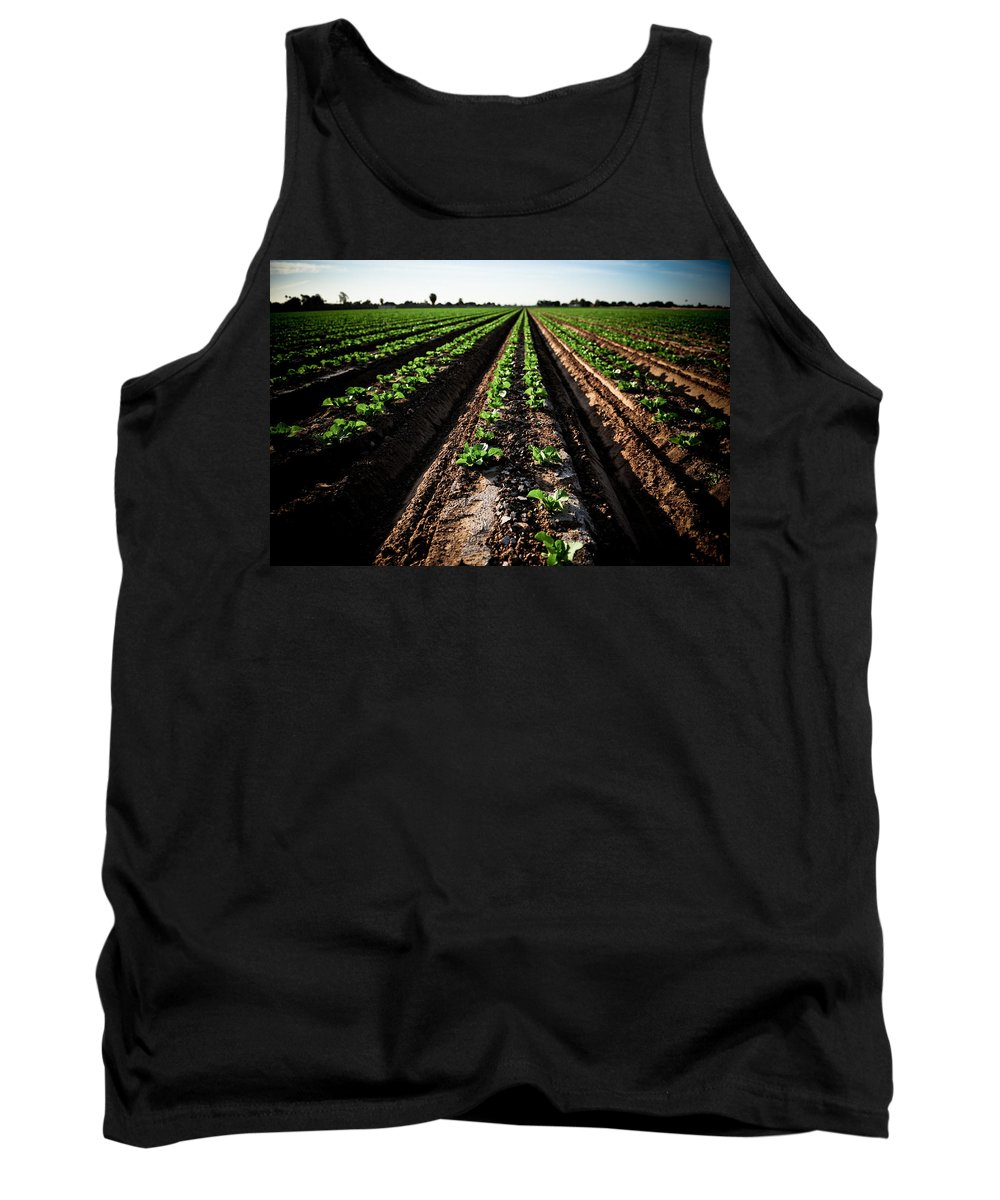 Lettuce Tank Top featuring the photograph Yuma Lettuce by Scott Sawyer