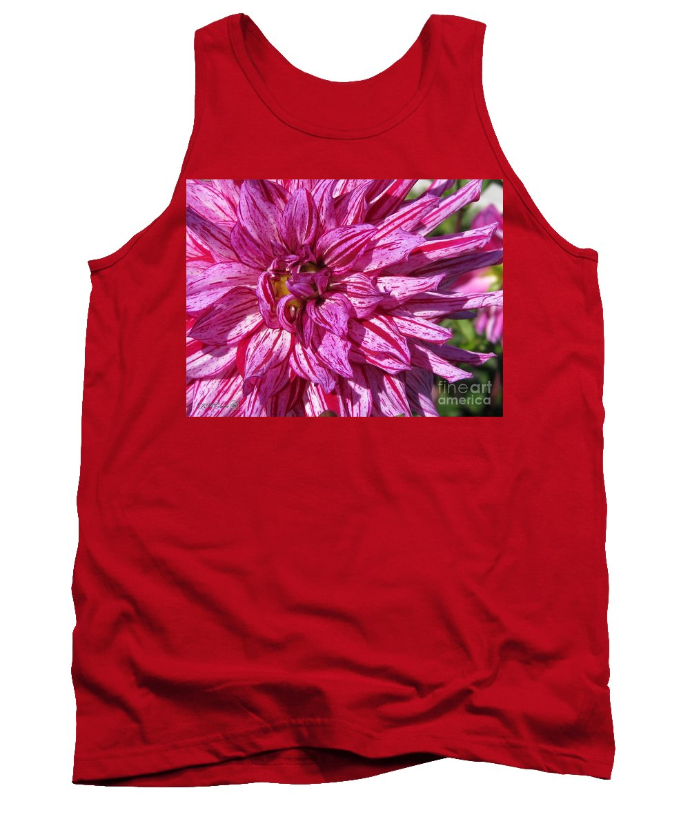 Dahlia Tank Top featuring the photograph Dahlia Named Annette C by J McCombie