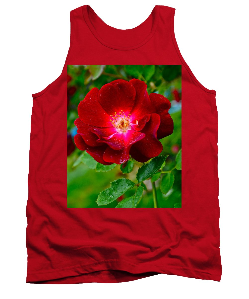 Rose Tank Top featuring the photograph A Rose Is A Rose by Frozen in Time Fine Art Photography