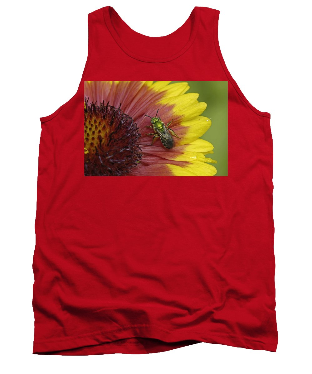 Insect Tank Top featuring the photograph Indian Blanket And Bee by Claudio Bacinello